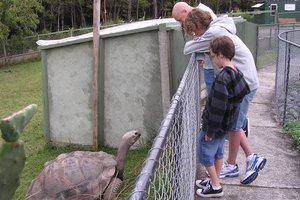 Children's initial fear of the park's skinks, lizards, geckos, tortoises - and alligators - is swiftly replaced by fascination. Photo / Supplied