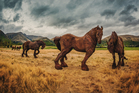The iron horses are designed to fit into the landscape at Sir Michael Hill's Central Otago golf course. Photo / Trey Ratcliff