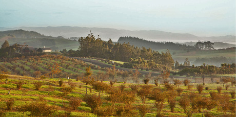 Te Arai Estate, an hour north of Auckland, has New Zealand's largest truffle farm. Photo / Mark Carter.