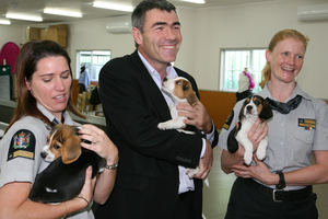 Primary Industries Minister Nathan Guy with new detector dog puppies at the Detector Dog Breeding Centre in Auckland today. Photo / Supplied