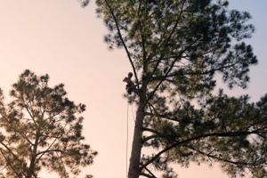 Property owners say they've been ripped off by arborists who proved to be amateurs. Photo / Thinkstock