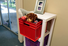 This storage unit can be altered in size depending on your needs. Photo / Michael Craig