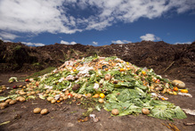 Half the food purchased in Europe and the US is thrown away after it is bought. Photo / The Aucklander 