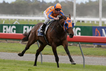 Rock 'N' Pop, the runner-up in last year's New Zealand Derby, is in the Takeover Target Stakes today. Photo / Supplied