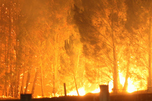 Over a dozen fires burned out of control across Tasmania overnight. File photo / APN