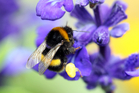 Bees pollinate about one-third of our food sources. Photo / Glenn Taylor