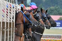Racing can be a dangerous business for both horses and humans. Photo / NZPA