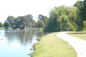 Masterton District Council has issued a warning about algae at Henley Lake. Photo / Amie Hickland