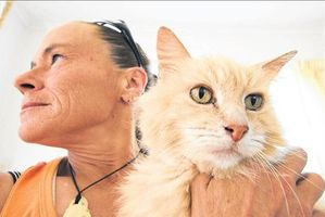 Tauranga pet parent Pam Andresen is upset Tauranga SPCA refused to take in an abandoned cat. Photo / George Novak