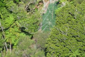 Police used helicopters to locate cannabis plots. Photo / Supplied