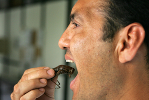 Chef Josh Emett doesn't believe New Zealanders are ready to introduce insects to their diet. Photo / AP