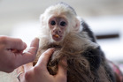 Justin Bieber forced to pay for monkey's stay