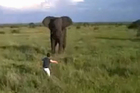The elephant initially swings its trunk towards the man, but soon makes its escape. Image / YouTube