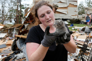 Pet rescuer Maeghan Hadley checks over a kitten pulled from under the rubble of a mobile home destroyed by Sunday's tornado in the Steelman Estates Mobile Home Park, near Shawnee, Oklahoma. Photo / AP