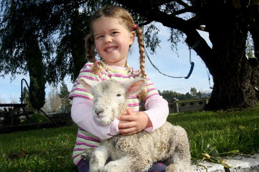 A HAPPY SURPRISE: Three and half year old Grace McGruddy, of Masterton, and a new born lamb which was rejected by its mother. Farmer Mike McGruddy was quite surprised to see a new born lamb on his farm, as he usually starts the lambing season in September