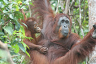 Borneo: Jungle classroom encounter