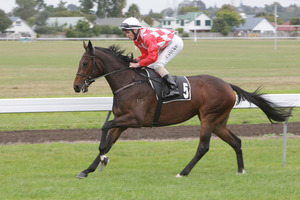 Hera is the horse to beat in the Great Northern Foal Stakes at Ellerslie today. Photo / Supplied