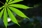 Officials in Rasquera adopted the cannabis-growing plan in February 2012. Photo / Thinkstock