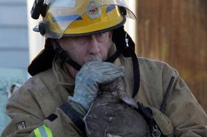 Fireman Gary Wilson emerges from the burning cottage giving mouth-to-mouth to a small puppy. Photo / Wanganui Chronicle