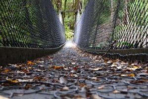 Tararua Forest Park. Photo / File photo