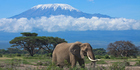 Tanzania's majestic Mt Killimanjaro dwarfs an elephant. Photo / Getty Images