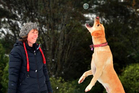 University of Otago School of Physiotherapy associate dean Dr Cath Smith walking her dog Ellie. Photo / Peter McIntosh