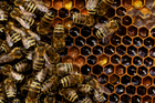 Bees On The Work. Photo / Getty