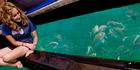 Watching underwater life off the Coromandel Peninsula. Photo / The Glass Bottom Boat Tour