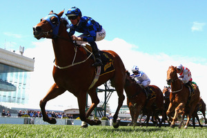 Buffering has drawn well for his attempt to win the Stradbroke Hcp at Eagle Farm on Saturday. Photo / Getty Images