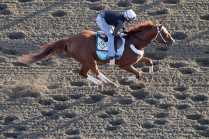 Golden Soul works out on the sand at Belmont in preparation for tomorrow's feature. She is a 10-1 prepost chance. Photo / AP