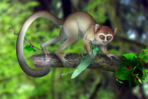 An artistic reconstruction of the tree-dwelling primate Archicebus achilles. Photo / AP