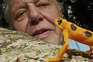 Sir David Attenborough. Photo / Supplied