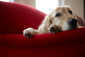 Do you have a couch potato pup? Photo / Thinkstock