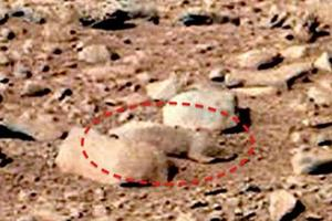 'Mars rat' discovered by UFO enthusiast Scott C Waring is just a rock. The panoramic image was taken by NASA's Mars rover Curiosity in September at the Rocknest site.