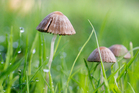 The drug in magic mushrooms is Class A, which means the law treats it in the same way as LSD, heroin or methamphetamine. Photo / Sarah Ivey