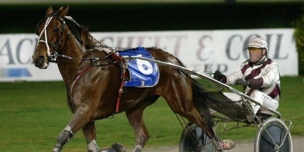 Anthony Butt was impressed by the Swedish trotters when campaigning Lyell Creek. Photo / Paul Estcourt