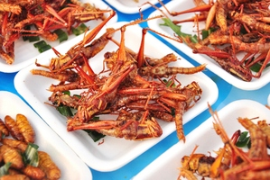 Insects are appearing on more menus. Photo / Thinkstock