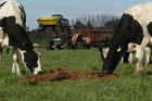 Improving confidence in the dairy sector saw farms sales and prices jump last month. Photo / NZH