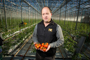 Tomato growers such as Jason Culbert are concerned about irradiated produce coming into New Zealand. Photo / Michael Craig