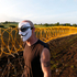 A protestor in a Guy Fawkes mask walks past razor wire outside a security perimeter of the G-8 summit in Enniskillen, Northern Ireland. Photo / AP
