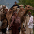 Pakistani camel milk sellers on their way to their homes in Islamabad, Pakistan. Photo / AP