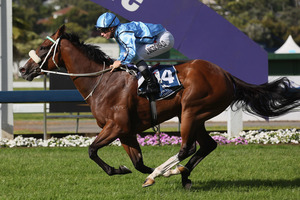 Handy mare Petty Cury will appreciate the drop in class at the Sunshine Coast on Saturday. Photo / Getty Images