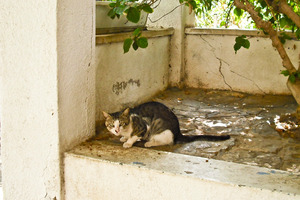 Many Tel Aviv people feed the strays. Photo / Anne Penketh