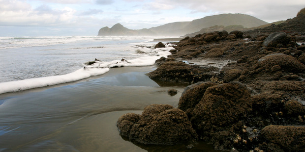 Wild, rugged and beautiful Bethells Beach, on Auckland's west coast. Photo / The Aucklander