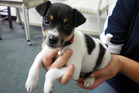This fox terrier puppy attracted a lot of attention after Napier SPCA posted it for adoption on its Facebook page.