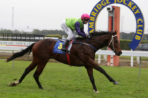 Wairarapa visitor Cauthen distances his rivals in the Goldpine Juvenile at Te Rapa yesterday.