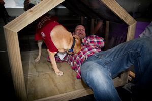 Talby the labrador keeps an eye on Canterbury agent Rich Norris as he works on his kennel. Photo / Sarah Ivey