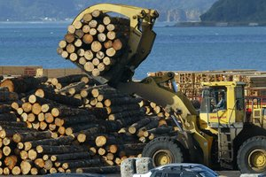 Log export prices rose last month. Photo / Mark Mitchell