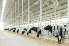 Fonterra's houses dairy farming at Yutain 2, China. Photo / David White
