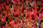Partygoers turn fluorescent at the Illuminate Paint Party at Forsyth Barr Stadium in Dunedin. Photos / Peter McIntosh